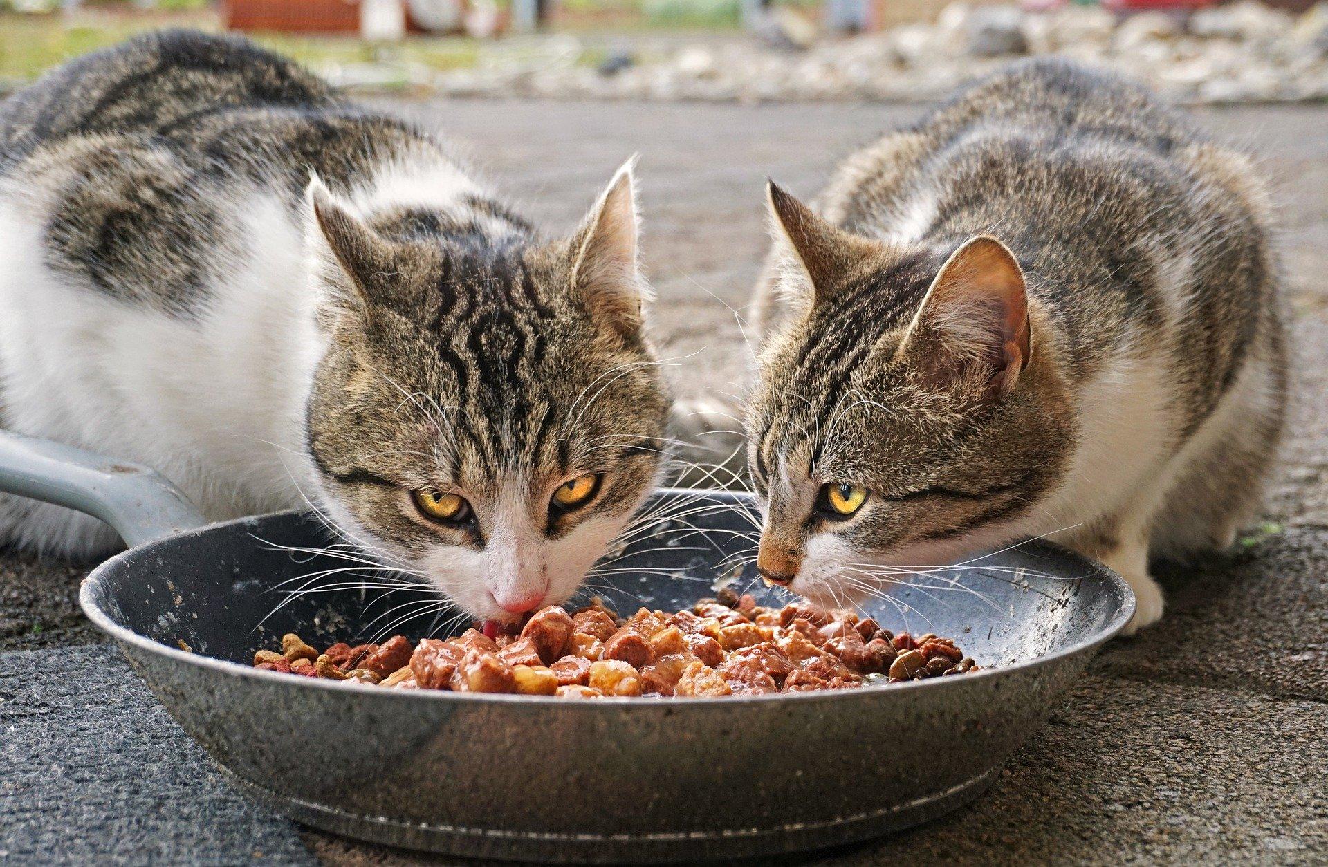 Katze Frisst Gewohntes Futter Nicht Mehr