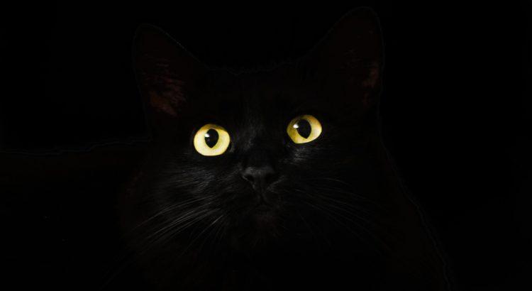 Katze verschwunden