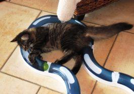 Spielzeug für Katzen