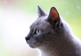 katzen hören gut