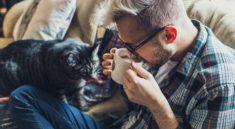 windeln für katzen