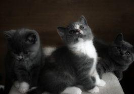 wie lange wachsen katzen