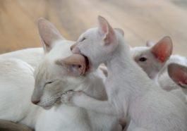 wann sind katzen ausgewachsen