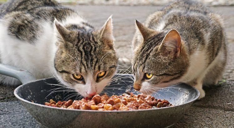 futterqualität katzenfutter