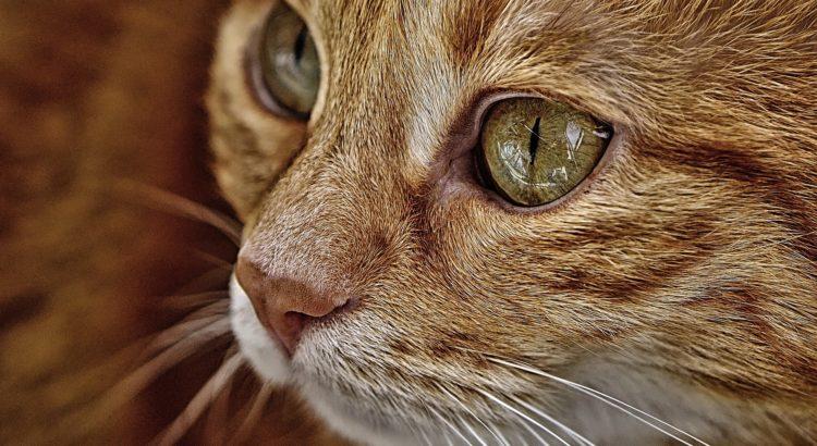 häufigsten operationen bei katzen